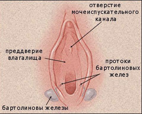 vospalenie-pesheristogo-tela-na-vlagalishe