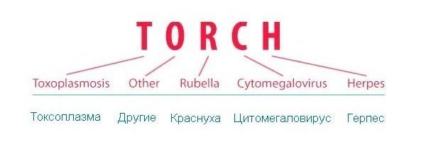 Торч инфекции что это при беременности 11