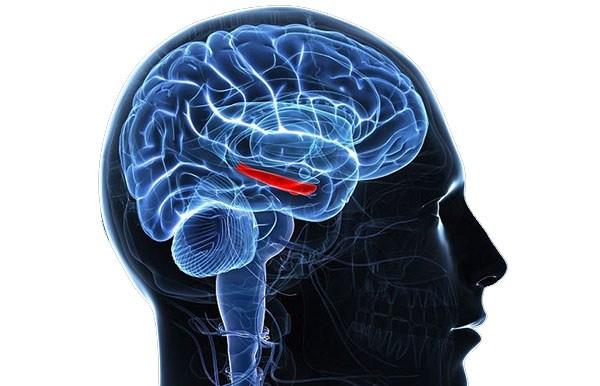 Гиперпролактинемия у мужчин и женщин