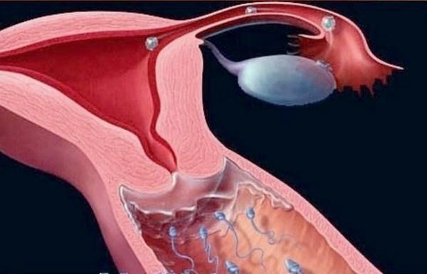 фото вагіни в крові